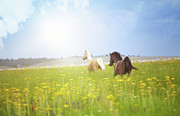 Summer Scene Posters - Two Horses Poster by Arman Zhenikeyev - professional photographer from Kazakhstan