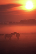 Non-urban Posters - Two Horses At Sunset Poster by John Foxx