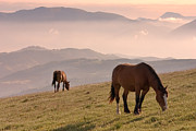 Grazing Horse Photo Posters - Two Horses Grazing On Mountain Top In Early Mornin Poster by Christiana Stawski