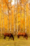 Landscape Posters Framed Prints - Two Horses in the Autumn Colors Framed Print by James Bo Insogna