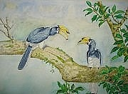 Hornbill Originals - two Indian Horn Bill by Saurav Das
