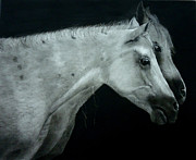 Wild Horse Drawings - Two is company by Mickey Raina