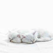 Close To People Framed Prints - Two Kittens Sleep. Framed Print by Ultra.f