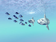 School Of Fish Digital Art - Two Large Sunfish Escort A School by Corey Ford