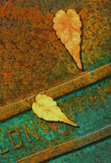 Bus Stop Prints - Two Leaves or Not Two Leaves Print by Paul Wear