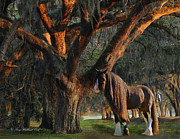 Shire Prints - Two Majestic Souls Print by Terry Kirkland Cook
