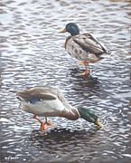 Mallards Paintings - Two Mallard Ducks Standing In Water by Martin Davey