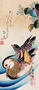 Period Painting Posters - Two Mandarin Ducks Poster by Pg Reproductions