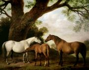 Animals Tapestries Textiles - Two Mares and a Foal by George Stubbs