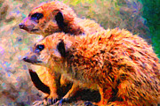 Meerkat Digital Art Prints - Two Meerkats . Photoart Print by Wingsdomain Art and Photography