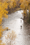 Two Fishing Men Prints - Two Men Flyfishing On The Aspen-lined Print by Pete Mcbride