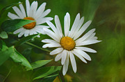 Jenny Rainbow Art Photography Prints - Two of Us. A Day for Daisies Print by Jenny Rainbow
