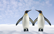 Love The Animal Prints - Two Penguins Holding Hands Print by Fuse