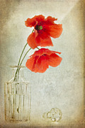 Glass Bottle Framed Prints - Two Poppies in a Glass Vase Framed Print by Ann Garrett