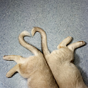 Flooring Prints - Two Puppy Tails In Heart Shape Print by GK Hart/Vikki Hart