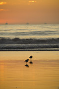 Sea Birds Prints - Two Sea Birds Standing In The Surf Print by James Forte