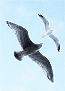 Flying Gull Posters - Two Seagulls Poster by Hakon Soreide