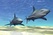 Underwater View Digital Art - Two Sharks On Patrol Over A Sandy Reef by Corey Ford