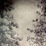 Winter Scene Photo Prints - Two Snowy Pines Print by Bonnie Bruno