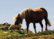 Grazing Horse Posters - Two Special Friends Poster by Dagmar Ceki