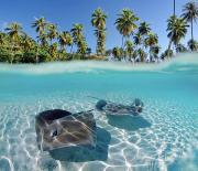 Tropical - Two Stingrays 1 by Monica & Michael Sweet - Printscapes