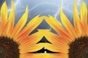 Lightning Strike Posters - Two Sunflower lightning Storm Poster by James Bo Insogna