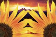 Landscape Posters Framed Prints - Two Sunflower Sunset Framed Print by James Bo Insogna