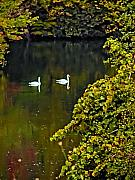Poconos Art - Two Swans by Bill Cannon