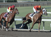 Race Horse Photos - Two Together by Clarence Alford
