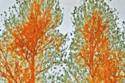 Abstract Nature Photography - Two Trees by Ben and Raisa Gertsberg