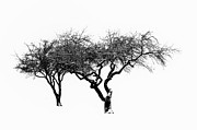 Barren Digital Art Posters - Two Trees Poster by Bill Cannon