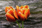 Byron Varvarigos - Two Tulips And Stone