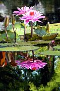 Water Lilies Photo Posters - Two Worlds Poster by John Lautermilch