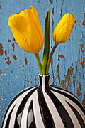 Blue Vase Metal Prints - Two Yellow Tulips Metal Print by Garry Gay
