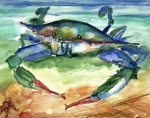 Crab Posters - Tybee Blue Crab Poster by Doris Blessington