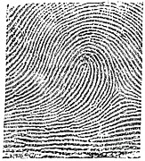 Investigate Prints - Typical Loop Pattern, 1900 Print by Science Source