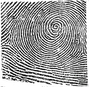 Law Enforcement Prints - Typical Whorl Pattern, 1900 Print by Science Source