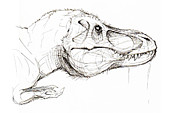 Dinosaur Drawings Originals - Tyrannosaur sketch by Justin F C Miller