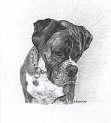 Boxer Drawings Framed Prints - Tyson Framed Print by Marlene Piccolin