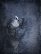 Gull Seagull Framed Prints - Ubiquitous Framed Print by Jan Pudney
