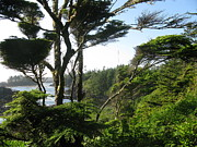 Brian Sereda - Ucluelet Trees