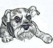 Tiffany Drawings - Ugly Dawg by Tiffany Everett