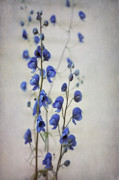 Wild Flower Art - Ultramarine  by Priska Wettstein