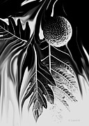 Kerri Ligatich Prints - Ulu - Breadfruit Abstract Print by Kerri Ligatich