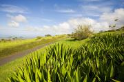 Pastureland Photo Posters - Ulupalakua Country Road Poster by Ron Dahlquist - Printscapes
