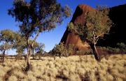 Clear Blue Sky Framed Prints - Uluru, Ayres Rock Against A Clear Blue Framed Print by Jason Edwards
