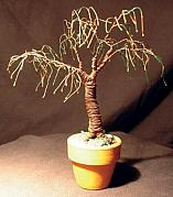 Sal Villano - UMBRELLA BONSAI wire...