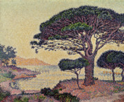 Umbrella Pine Posters - Umbrella Pines at Caroubiers Poster by Paul Signac