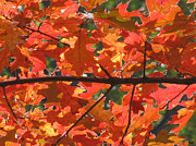 Change To The Cold Prints - Under Autumn Leaves Print by Debra     Vatalaro