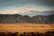Longhorn Photo Acrylic Prints - Under  Big Skies Of Montana Acrylic Print by Doug van Kampen, van Kampen Photography